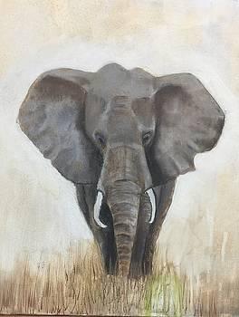 African Elephant by Elaine Callahan
