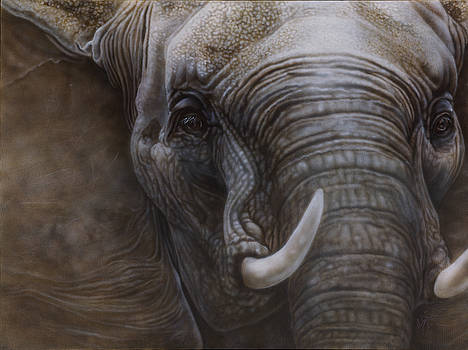 African Elephant by Wayne Pruse