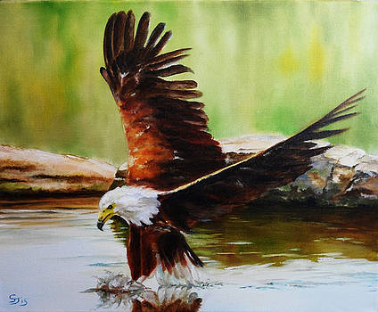 African Fish Eagle by Steve James
