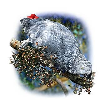 African Grey Parrot A1 by Owen Bell