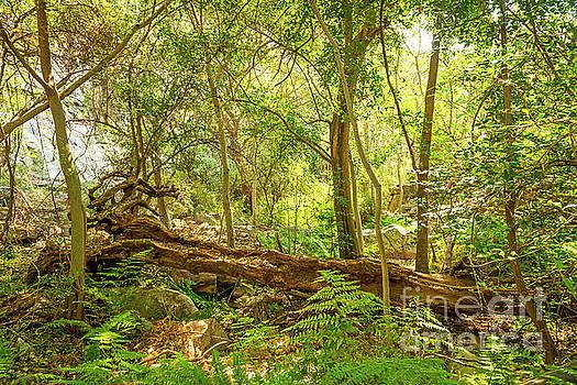 Tim Hester - African Jungle Landscape