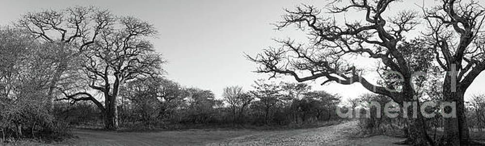 Tim Hester - African Landscape Panorama Black And White