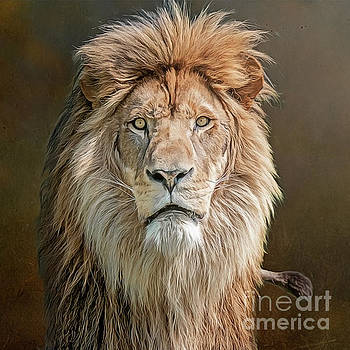 African Lion Portrait by Brian Tarr