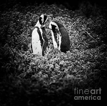 Tim Hester - African Penguin Couple Black and White