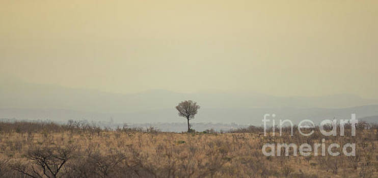African Plains by Petrus Bester