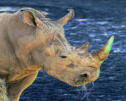African Rhino 1 by Steven Howes