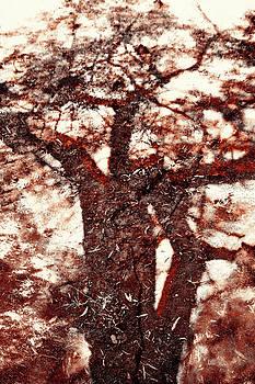 Menega Sabidussi - African Shadow Tree Nr 1