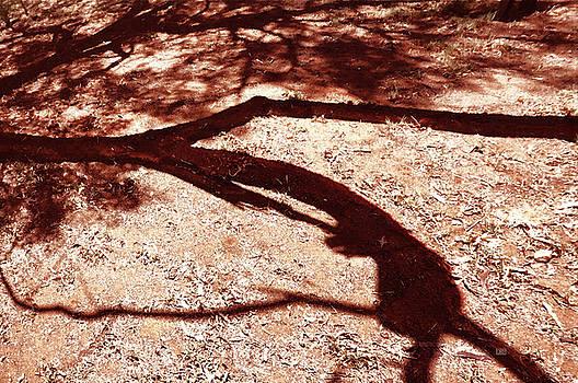 Menega Sabidussi - African Shadow Tree Nr 6