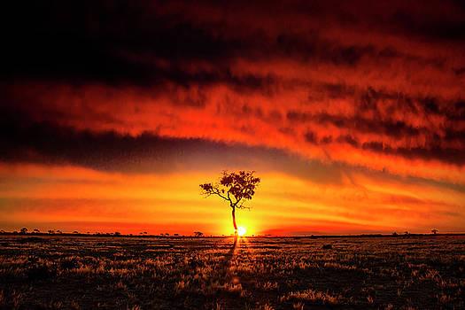 African Sunset by Matt Cohen