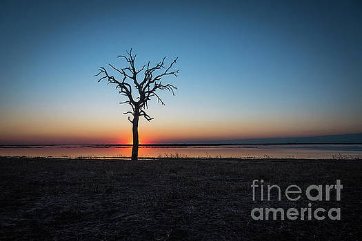 African Sunset by Sandy Molinaro
