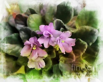 African Violets by Anne Pendred