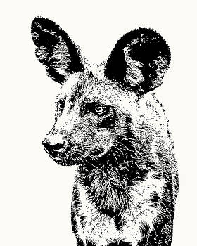 African Wild Dog on Alert by Scotch Macaskill
