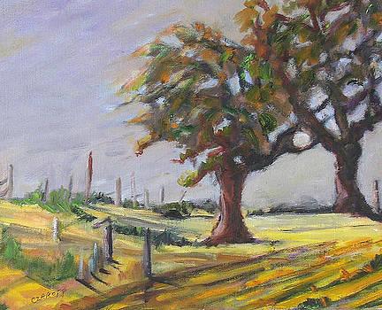 After Harvest by Carolyn Zaroff