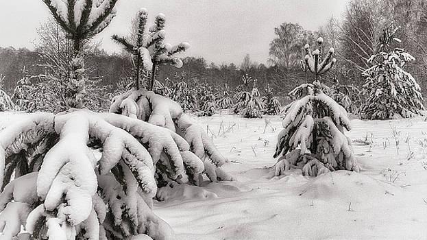 After snowstorm. Horytsya, 2018. by Andriy Maykovskyi