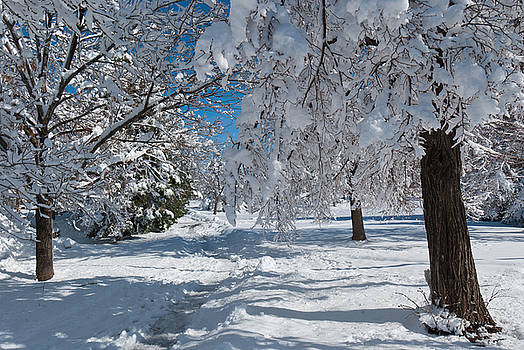 After the Blizzard by Cascade Colors
