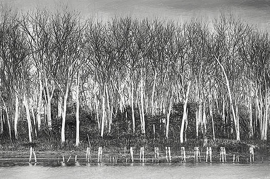 Nikolyn McDonald - After the Flood - Black and White