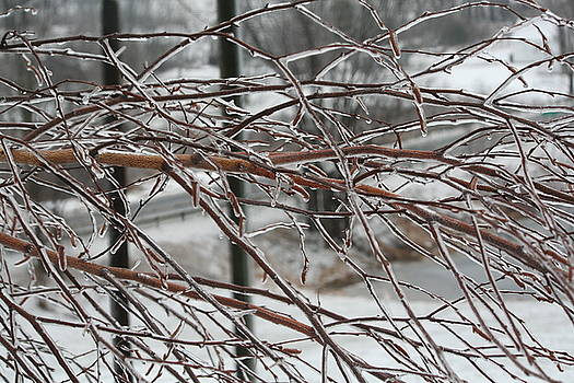 After the Ice Storm by Aggy Duveen