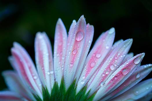 After The Rain by Sandi Kroll