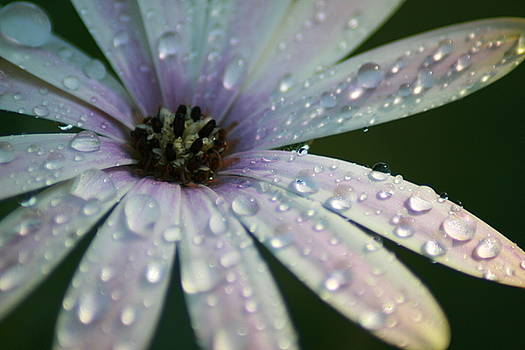 After the Rain by Shelley Grabow