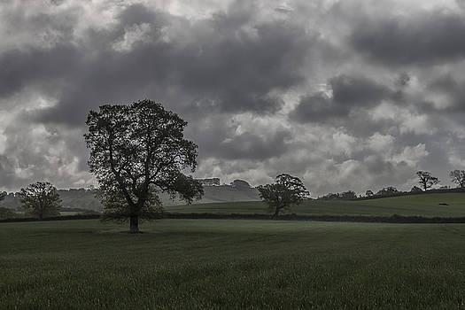 Stewart Scott - After the rain