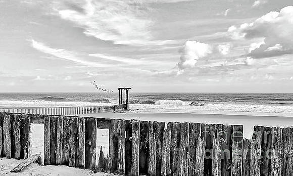 After The Storm Black And White by Kathy Baccari