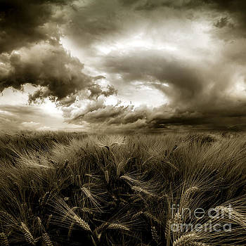 After The Storm  by Franziskus Pfleghart