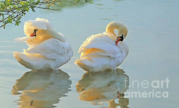 Afternoon Delight by Susan Wall