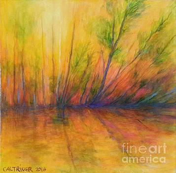 Afternoon Glow  by Alison Caltrider
