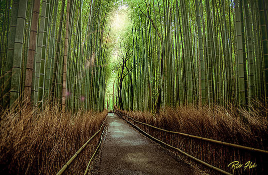 Afternoon in the Bamboo by Rikk Flohr