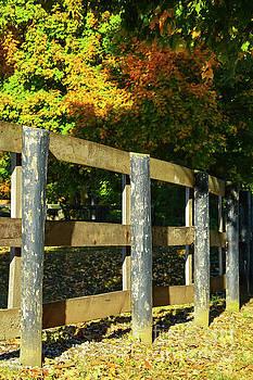 Bob Phillips - Afternoon Light on Wood Fence