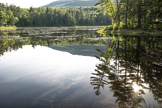 Afternoon Reflections by Morgain Bailey