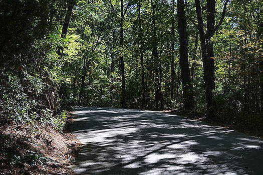 Afternoon Shadows - Oconee State Park by Kathleen Palermo