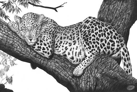 Afternoon Snooze by Richard Savage