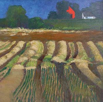 Afternoon Sun On the Farmers' Field by Philip Hewitt