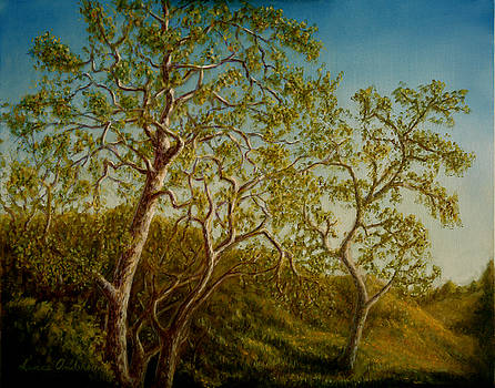 Afternoon Sycamores by Lance Anderson