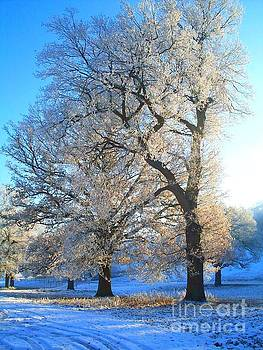 Afternoon trees by Elena Ivanova