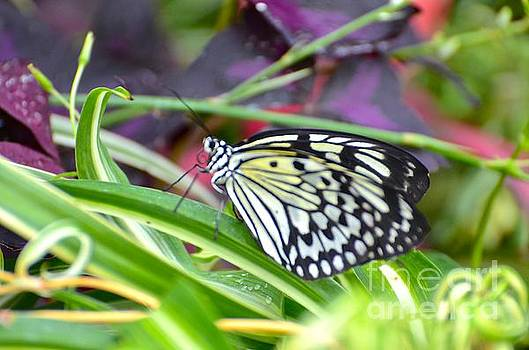 Against the Green Butterfly by Stephanie  Bland