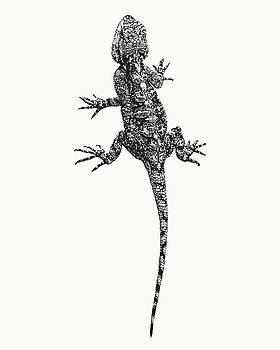 Agama Lizard in Graphic Monochrome by Scotch Macaskill