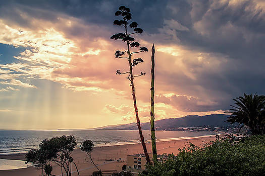Agava Overlooking The Bay At Sunset by Gene Parks