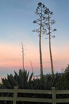 Art Block Collections - Agave Above Santa Monica