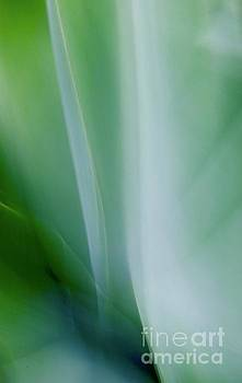 Agave Abstract 12 by Glennis Siverson