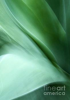 Agave Abstract 5 by Glennis Siverson