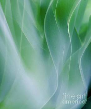 Agave Abstract 6 by Glennis Siverson