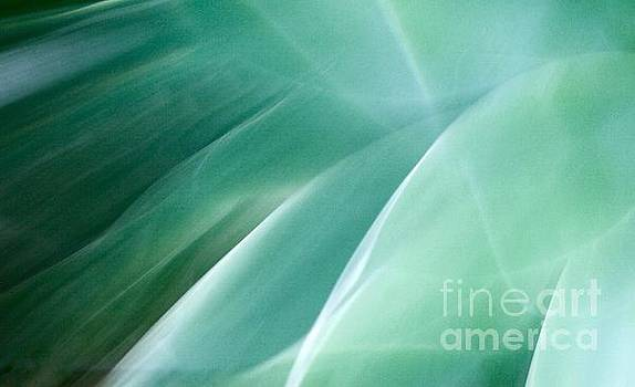 Agave Abstract 8 by Glennis Siverson