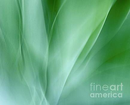 Agave Abtract 11 by Glennis Siverson