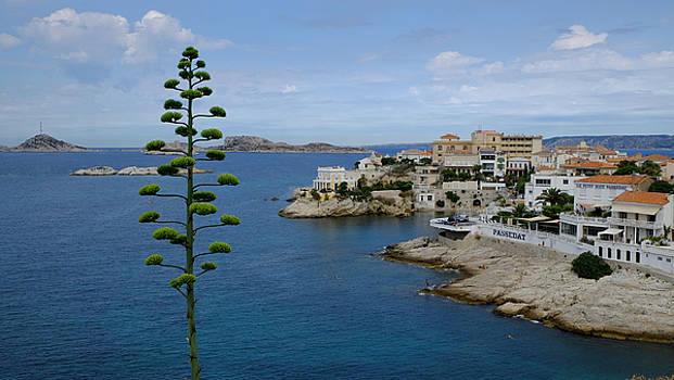 Agave at Corniche by August Timmermans