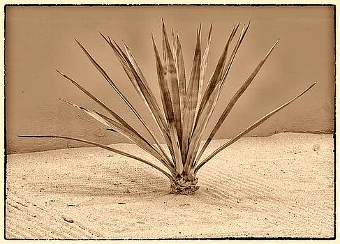 Jan Hagan - Agave on White Sand