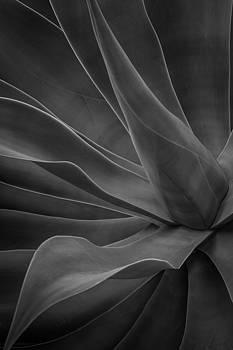 Rick Strobaugh - Agave Plant BW