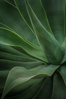 Rick Strobaugh - Agave Plant