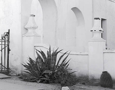 Nathan Mccreery - Agave Plant San Xavier del Bac